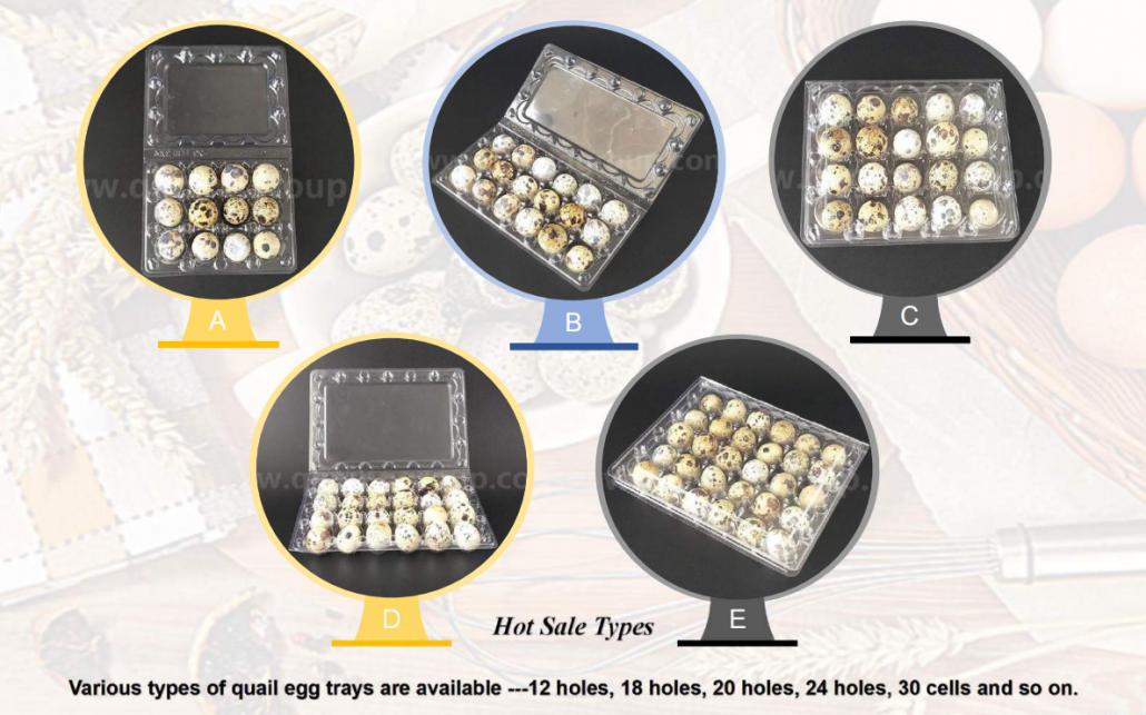 Plastic Quail Egg Tray